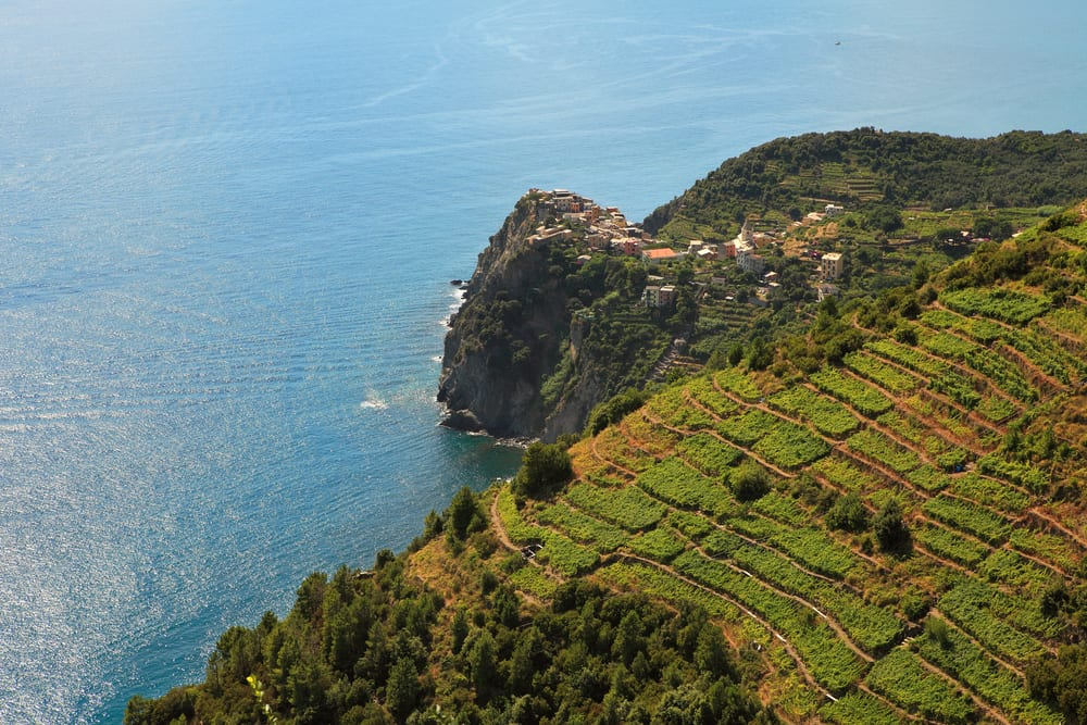 Vineyards on the Amalfi coast