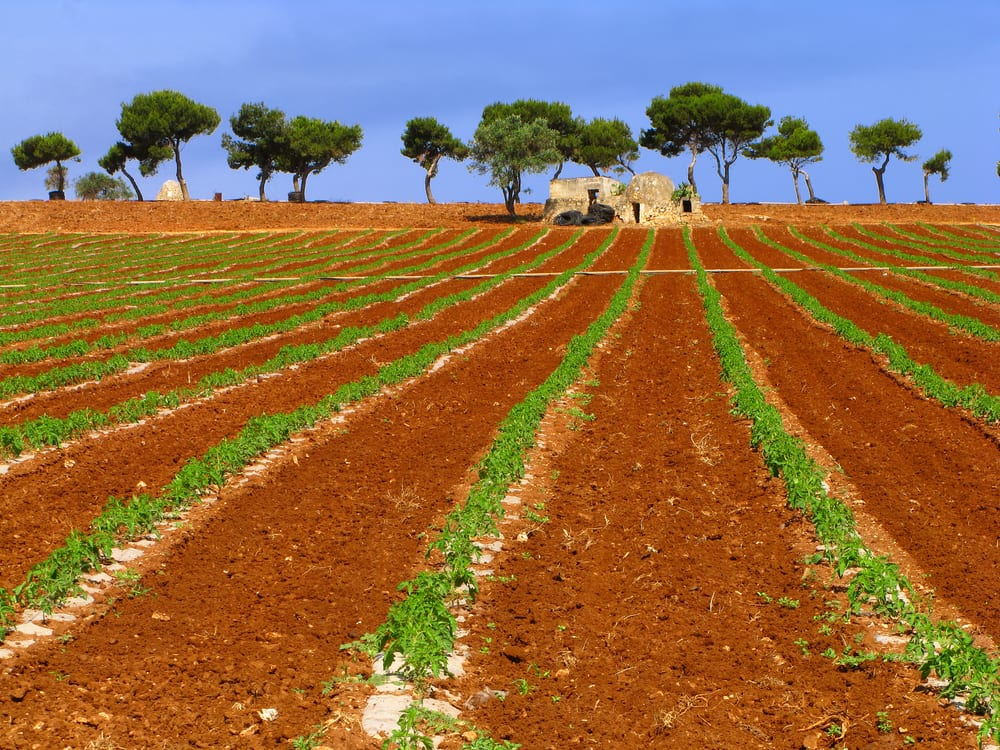 The countryside in Puglia