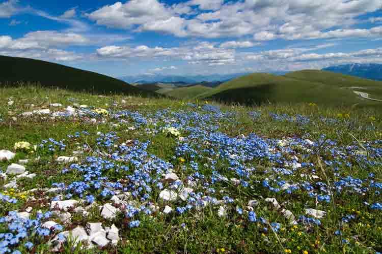 Springtime wildflowers in Abruzzo's Campo Imperatore