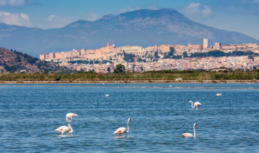 flamingoes at cagliari